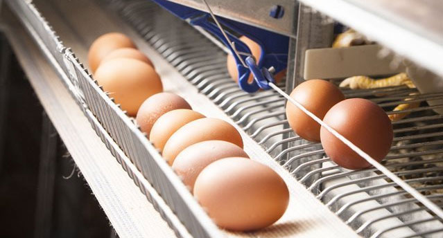 GSI Grain, pig and poultry production systems